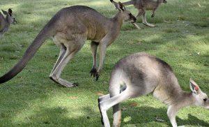 10 ciekawostek o Australii