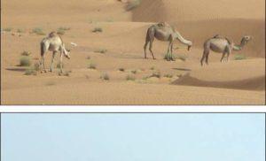 Ar-Rab al-Chali – największa pustynia na świecie