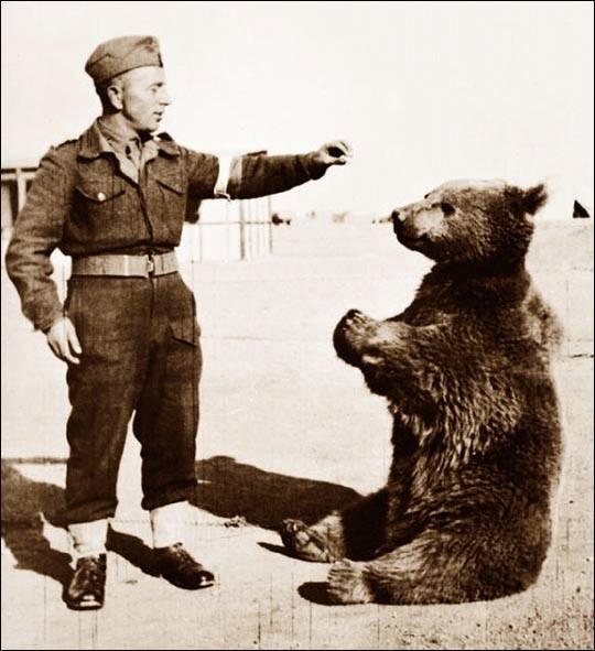 Niedźwiedź spod Monte Cassino ma pomnik