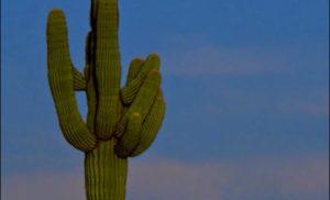 Niezwykła Arizona