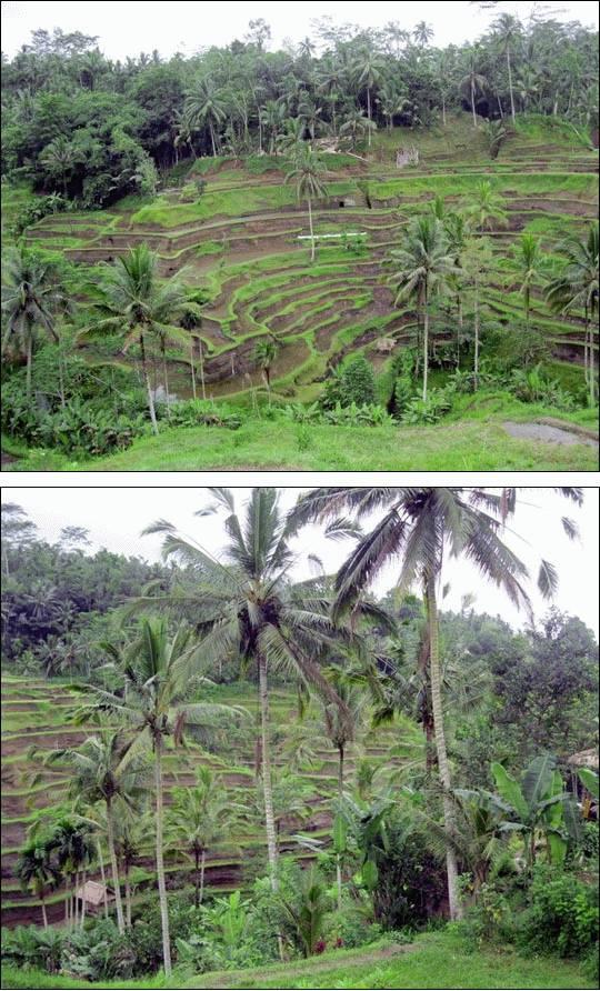 Odwiedzamy wyspę Bali, Indonezja