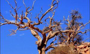 Pustynia w Arizonie