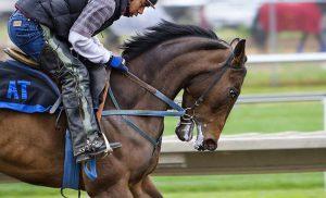 Warszawski Służewiec. Wyścigi konne przyciągają kibiców
