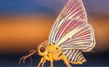 10 ciekawostek o motylach