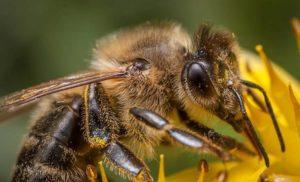 10 ciekawostek o pszczołach