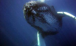 10 ciekawostek o wielorybach