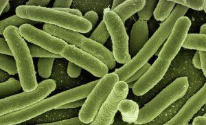 10 ciekawostek o bakteriach