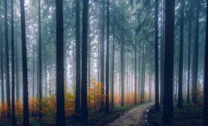 10 ciekawostek o drzewach