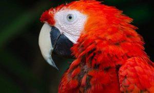 10 ciekawostek o papugach