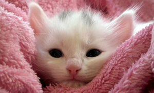 10 ciekawostek o kotach