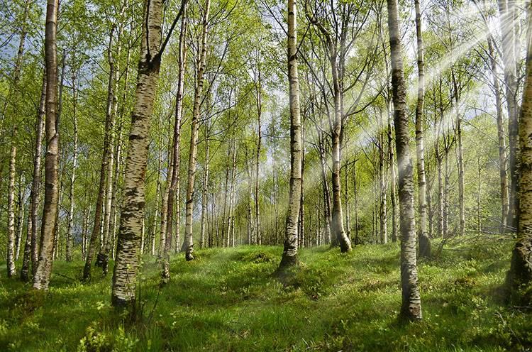 las park kleszcz ciekawostki borelioza kleszcze