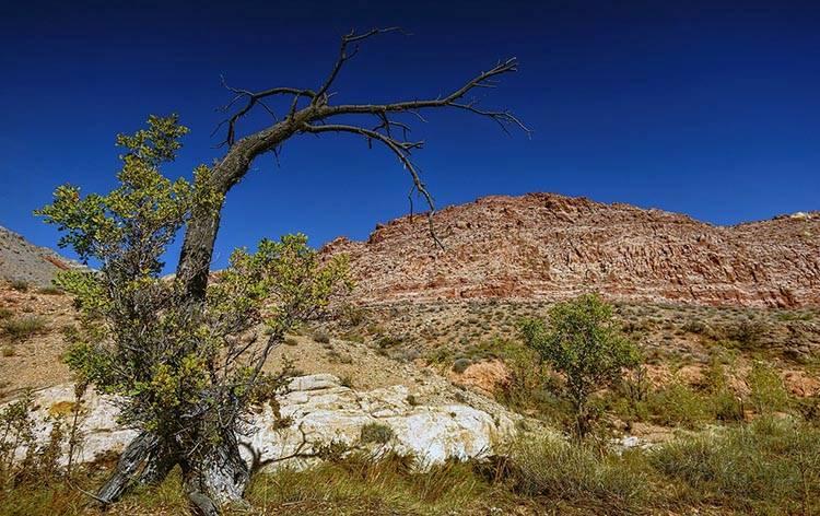 Nevada – ciekawostki
