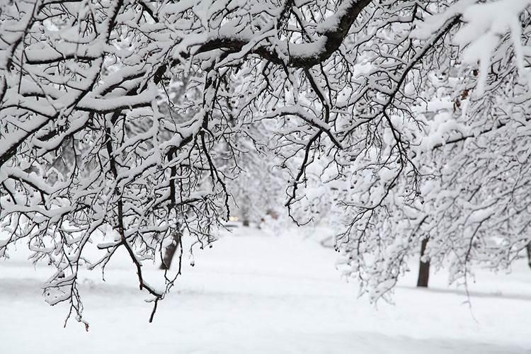 Zadziwiające ciekawostki o zimie