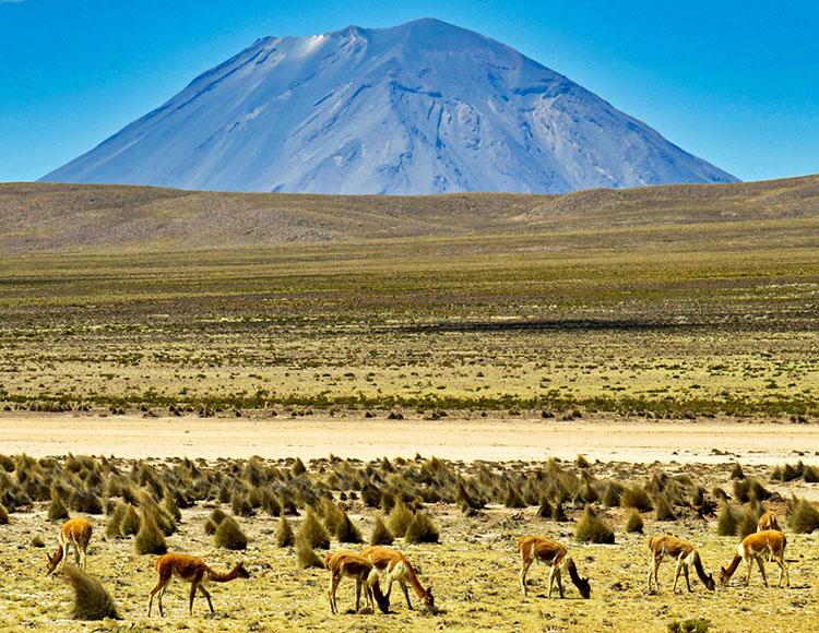 wulkan El Misti Peru ciekawostki atrakcje przyroda